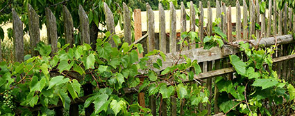 old fence needing replacement roselaw
